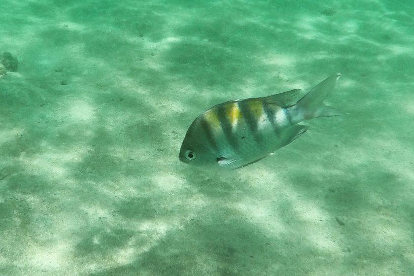 Alagoas peces