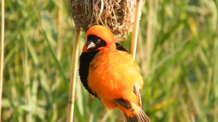 aves pilanesberg