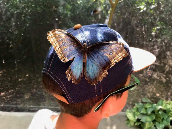 15 fotos de Aruba Butterfly