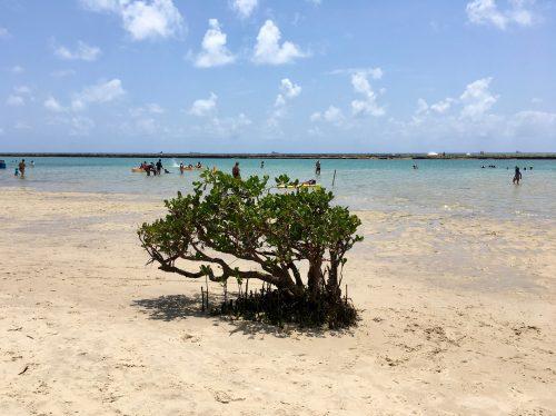 Playa Muro Alto