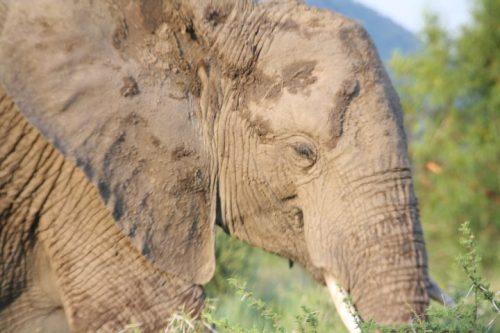 Sudafrica destinos impedire Pilanesberg