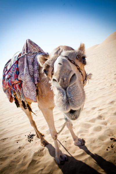 Top 10 atracciones Dubai-Safari por el desierto